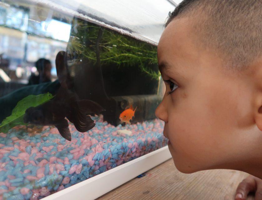 Kinderdagverblijf Sperwerlaan - Kiddoozz kinderopvang Rotterdam